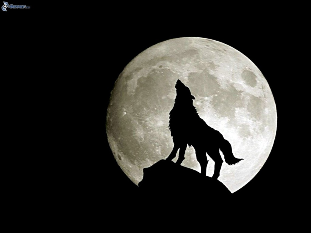wolf howl, moon, silhouette, full moon 159922